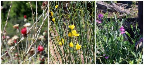 Almaden Wildflowers