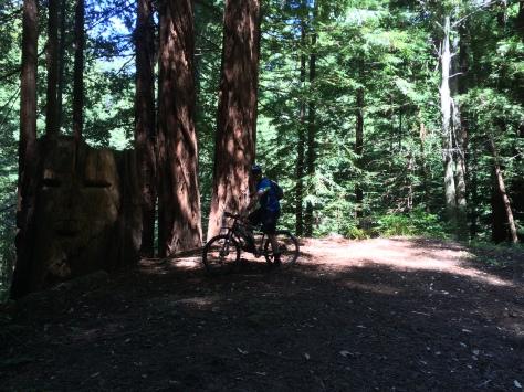 Andrew + Trees