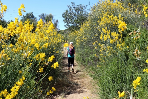 Yellow Kid Trail