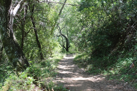 Tree Lined Trails