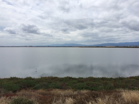 Alviso Slough Trail