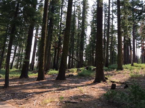 Union Valley Bike Trail