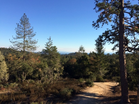 Henry Cowell Redwoods State Park: to the Sea